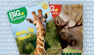 ranger rick s big backyard magazine only 10 per year 50 off