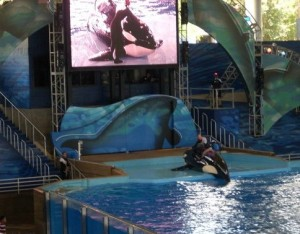 shamu-show