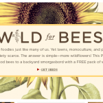 FREE Wildflower Seeds from Burt's Bees