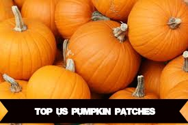 us-pumpkin-patches