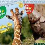Ranger Rick's Big Backyard Magazine only $10 per year (50% off)